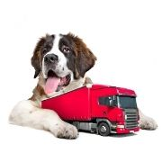 pies bernardyn z czerwoną ciężarówką